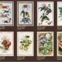 Catálogo Paños de Cocina Verano 2021-11