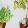 Limonaia Lino Resinado